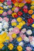 Chrysanthemums, 1897